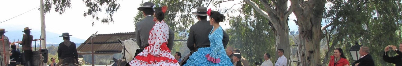 Andalusische paarden
